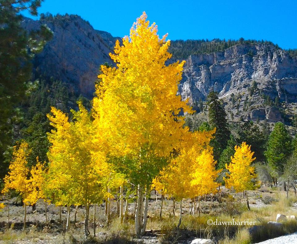 Trees with some yellow leaves by Dawn Barrier
